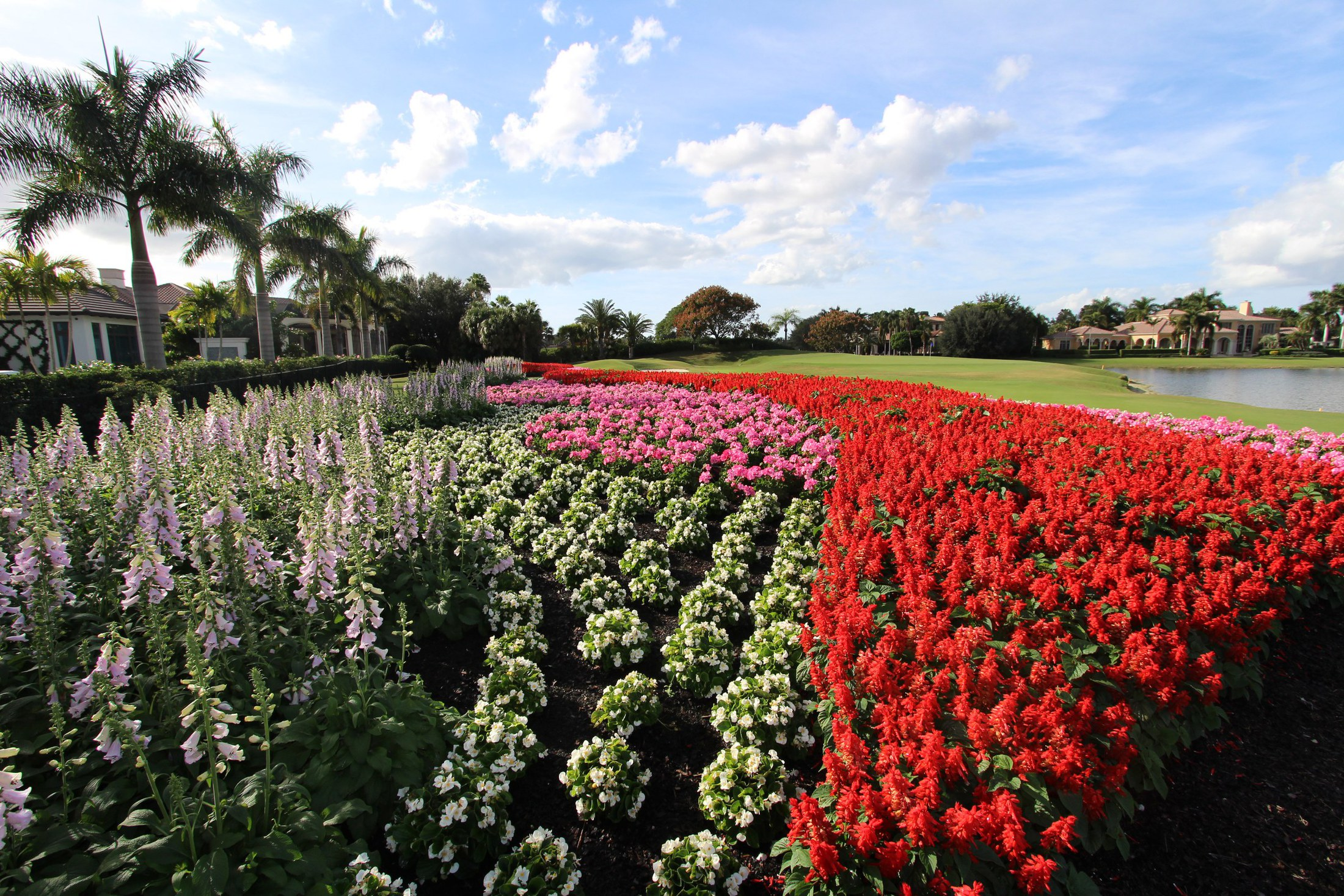 Annual flower installation club care of florida management companies all across florida allow us to recommend plants that are sure to make your property shine all year long izmirmasajfo